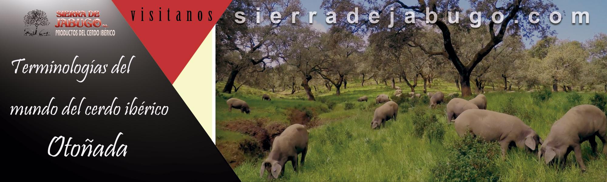 Otoñada dehesa Sierra de Jabugo